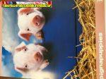 Füzet A/4 Pigna Puppies kockás (87-32)