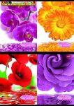 UNIPAP Flowers Spirálfüzet, A4, kockás, 80 lap